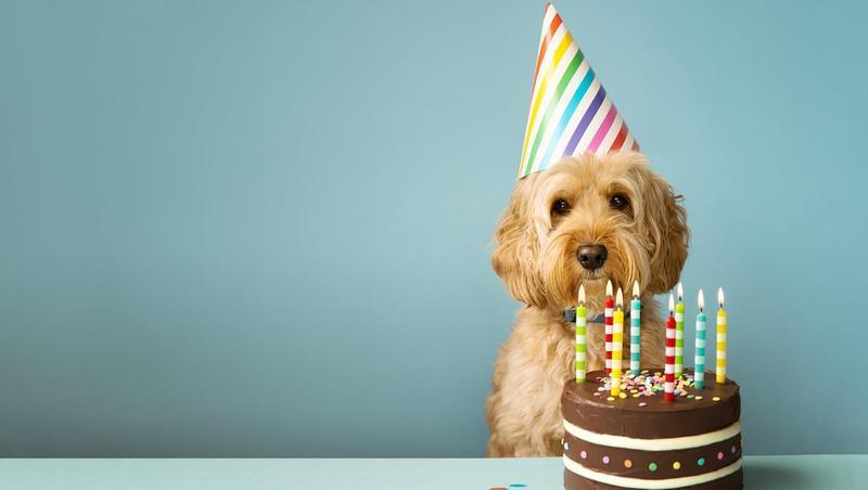 gettyimages dog birthday thumb