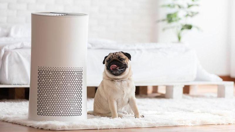 getty images chien purificateur air